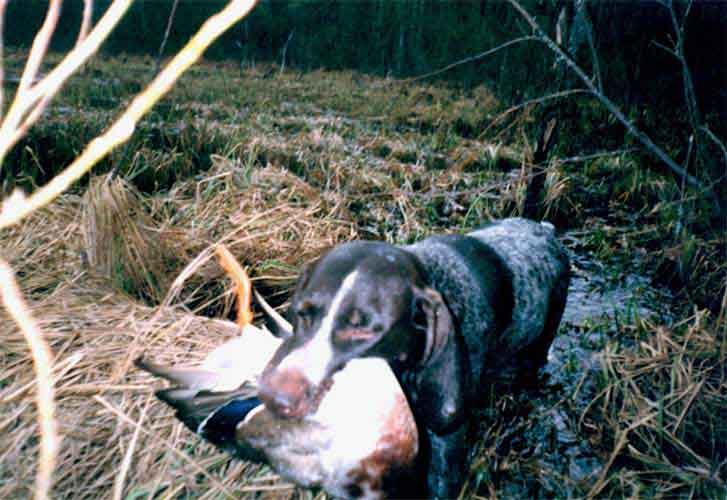 В вепсском лесу отличная охота